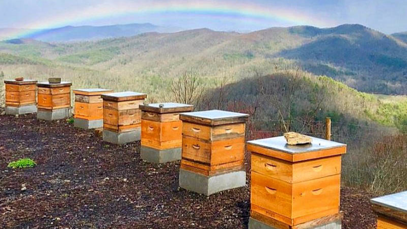 killer bees tour sapphire valley
